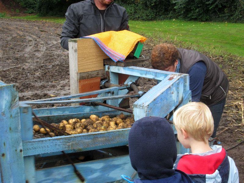 Kartoffelernte_2013_kl_010